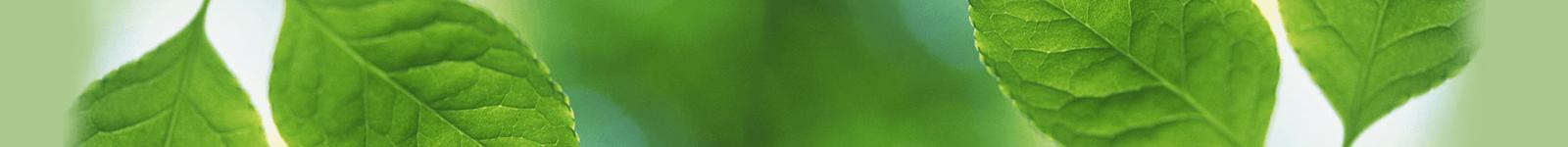 بیمه عمر و تامین آتیه پاسارگاد برگه سبزی است تحفه درویش